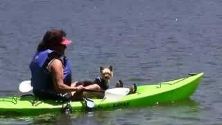 Yorkie Puppy, Mrs. Peabody goes Kayaking!  Chapter 21