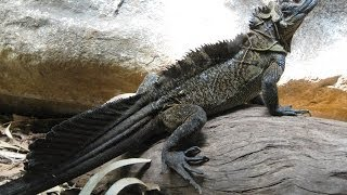 Top 7 Creepiest & Dragon-Like Lizards