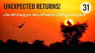 Return of Birds and Lions| Return from Extinction | Julius Manuel  Hisstories