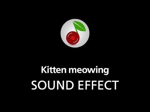 Kitten meowing, sound effect