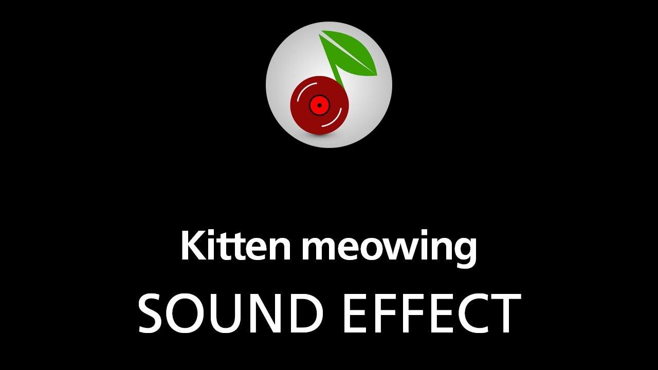 Kitten Meowing Sound Effect Youtube