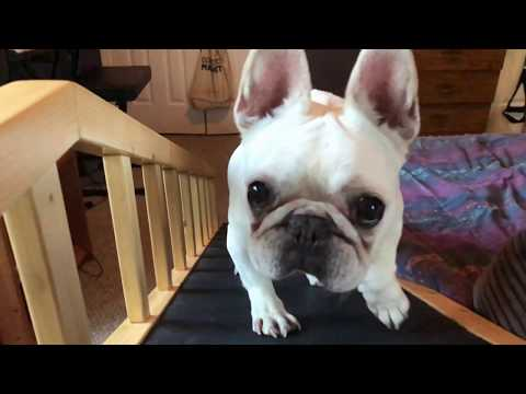gentle-rise-dog-bed-ramp-demo