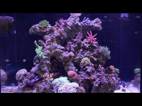 Red Sea Reefer pt19: Six Months!