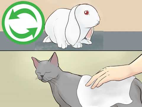 how-to-keep-a-rabbit-and-a-cat