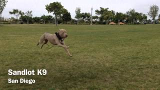 Dog Training San Diego | Sandlot K9 Services  Call Us (562) 841-1312