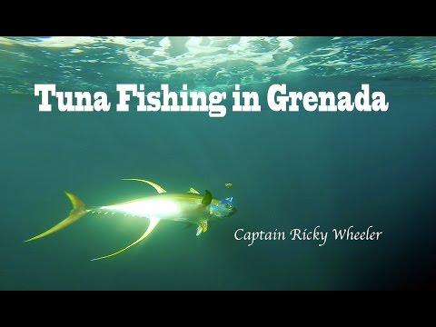 EPIC Yellowfin Tuna Fishing in Grenada (Ep2 2016 - Captain Ricky Wheeler)