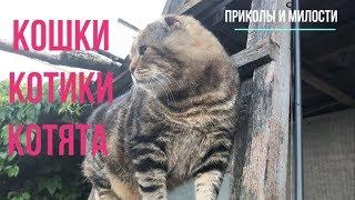 Кошки котики котята / Лиза Упс 1#8