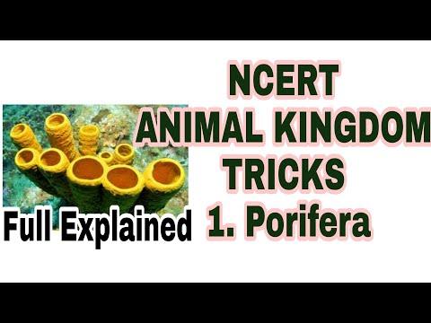 NEET/AIIMS 2019 ANIMAL KINGDOM TRICKS Lecture 2 (Porifera Phylum) Full NCERT based thumbnail