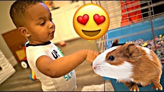 SURPRISING DJ & KYRIE WITH A NEW PET 😍 | THE PRINCE FAMILY