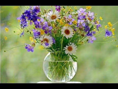 🔝 ХуДоЖнИкИ | Живопись | Рисуем вместе | Полевые цветы | Татьяна Мацик