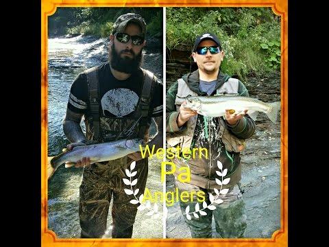 Erie, PA walnut creek steelhead fishing 10-4-2016