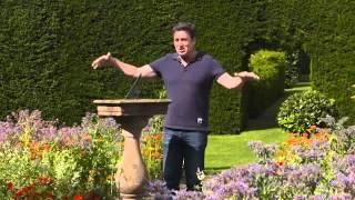 The Garden Gurus - Ireland Gardening - Wall garden