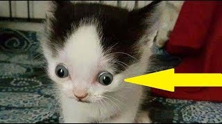 No One Wanted This Adorable Kitten And The Reason Why Will Surely Break Your Heart ! thumbnail