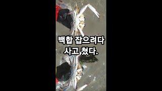 백합 잡으려다 사고 쳤습니다. 고인 물에 특대 암꽃게가…