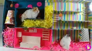 ХОМЯЧКИ В ЛАБИРИНТЕ hamsters in the maze