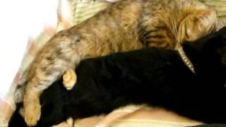 Spooning cats