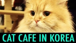 Cat Cafe in Myeondong, Korea (KWOW #141)