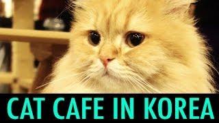 Cat Cafe in Myeondong, Korea (KWOW #141)