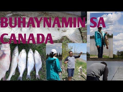 FISHING TIME AT SELKIRK  MANITOBA #FISHINGTIME