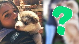 6 УДИВИТЕЛЬНЫХ ИСТОРИЙ, когда из маленьких животных ВЫРАСТАЛИ НЕВЕРОЯТНЫЕ СУЩЕСТВА