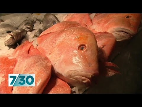 Was your fish caught by a slave? | 7.30