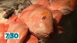 Fish sold in Australia being caught by modern-day slaves | 7.30