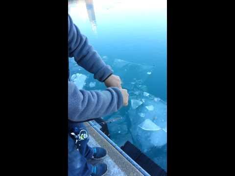 Navy pier fishing