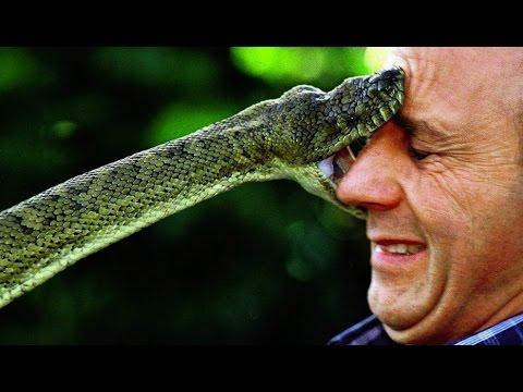 менеджмент рассматривает плохо ли убивать змей дыхания пульса увеличивается