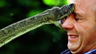 Топ 10 самых опасных змей в мире! Кузница Фактов.