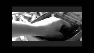 filmato pomodori verdi fritti modificato.wmv