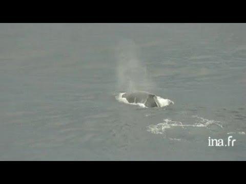 Gabon : baleines dans l'Océan Atlantique