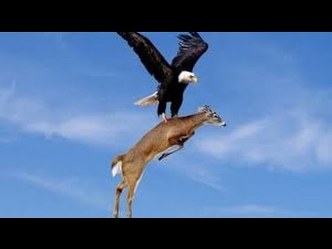 TOP 20 MOST UNBELIEVABLE PHOTOS - YouTube