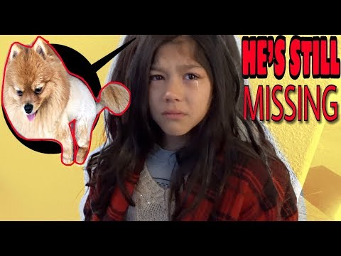 Day #3 & Our puppy is still MISSING! We need HELP!! |Txunamy