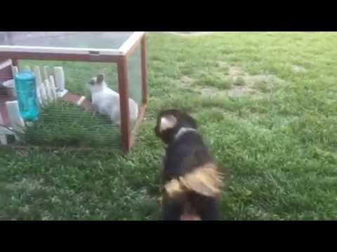 Puppy Hops Around With Bunnies