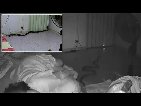 Big Mad Morning Show - Python Bites Grandmother As She Sleeps In Bed