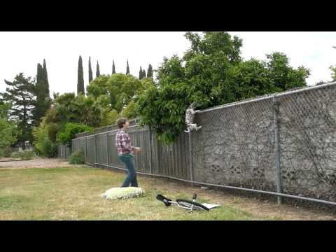 How To Stop A Dog From Climbing A Fence Goldenacresdogs Com