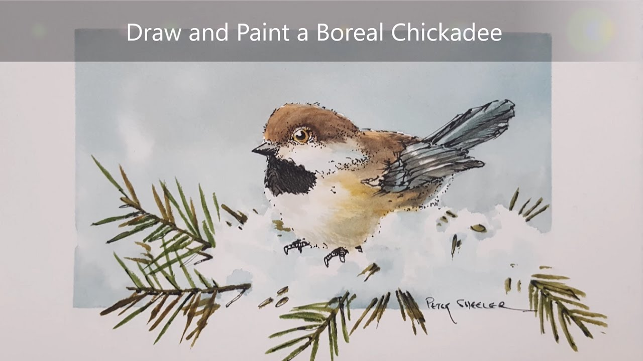 How To Draw And Paint A Chickadee Dry Brush Watercolour