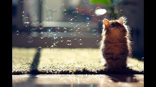 Звуки кошек - кошачий разговорник - мяу мяуканье