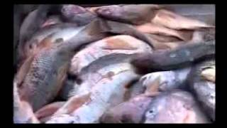 Worlds largest fishing industry in Pakistan