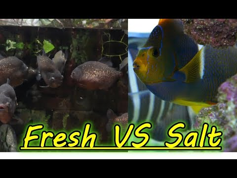 Are Freshwater Aquariums Easier Than Saltwater Aquariums?