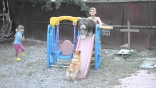 Собаки и дети играют во дворе и катаются на горке