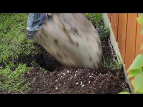 search result youtube video kiwi pflanzen. Black Bedroom Furniture Sets. Home Design Ideas