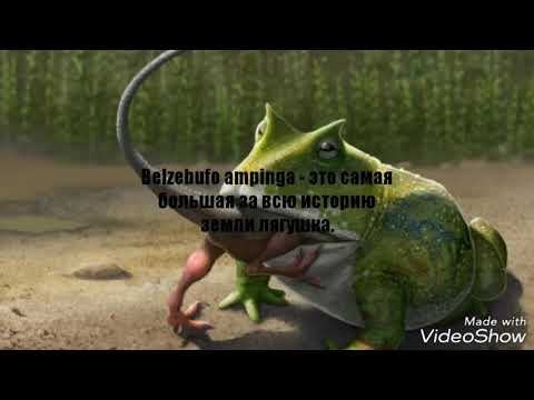 Вопрос: Где обитает самая крупная лягушка – голиаф?