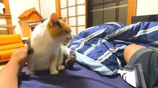 一か月ぶりの夜の大運動会を開催する三毛猫まりも。