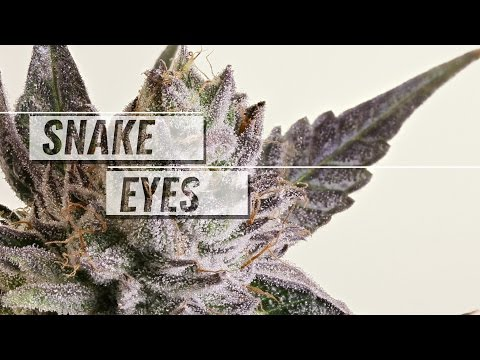 Snake Eyes strain review