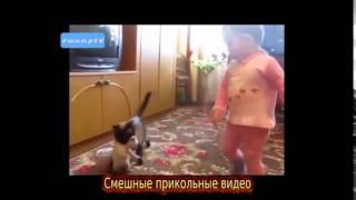 Приколы над людьми и животными, смешные видео подборки ютуба 2015