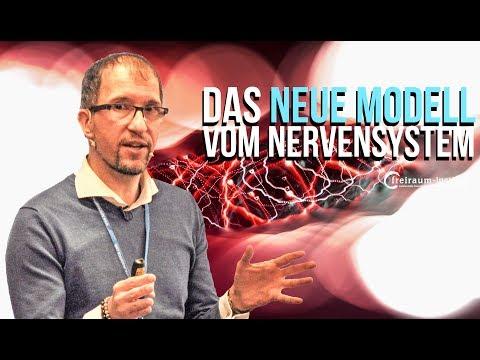 Nervensystem   Warum das alte Modell bei Trauma nicht ausreicht