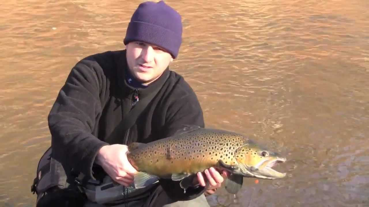 Fly fishing for brown trout at the oak orchard new york for Oak orchard fishing report