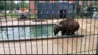 Померяемся силой с медведем. Кто победит - 😀#человек или #медведь?