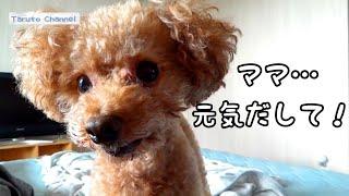 ここ数日、Taruちゃんの耳のことや、Rasukuのジアルジア、ママの入院、...